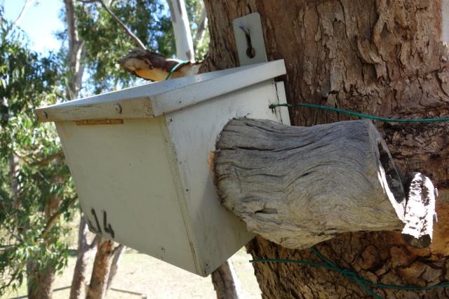 KingfisherBox